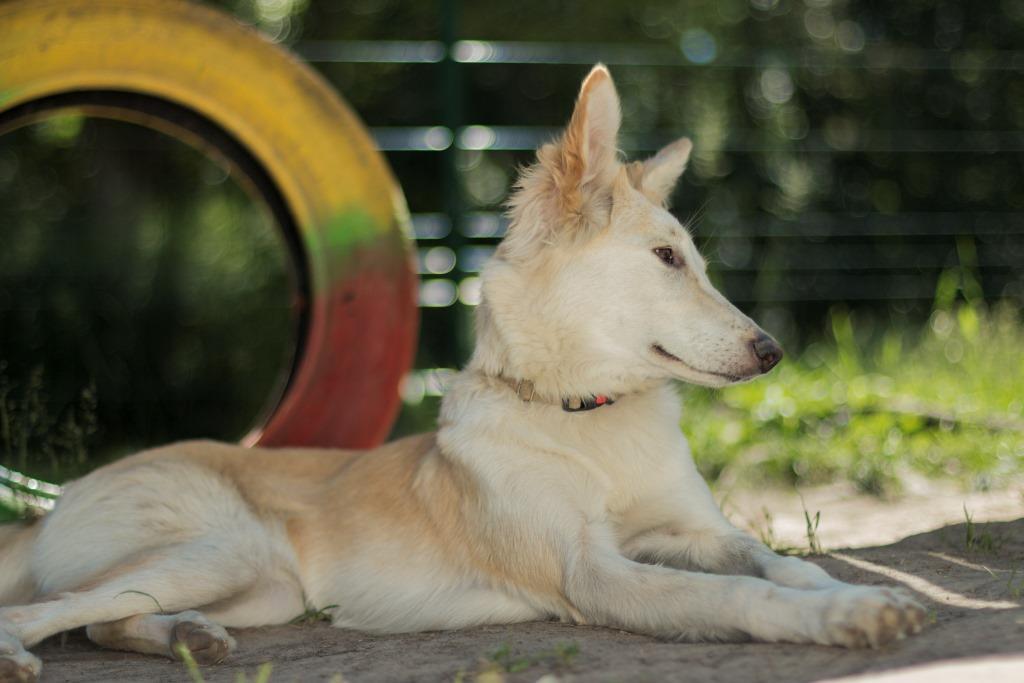 как собаки переносят жару - как не допустить перегрев