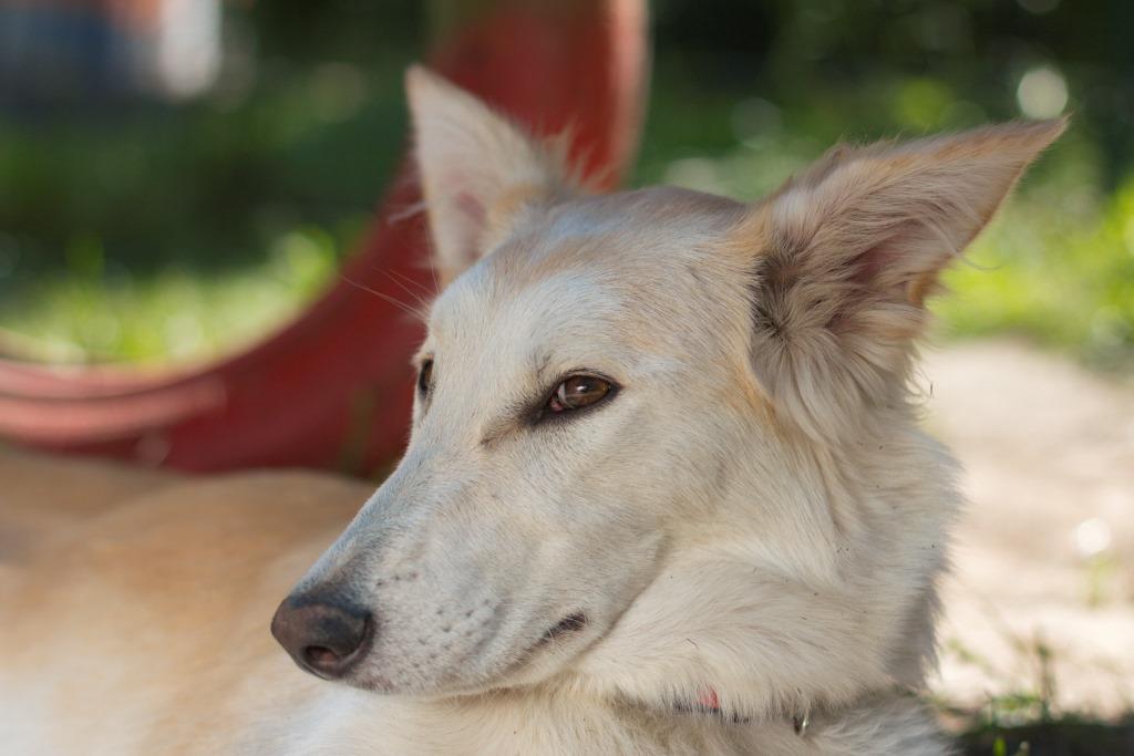 перегрев и тепловой удар у собак как помочь