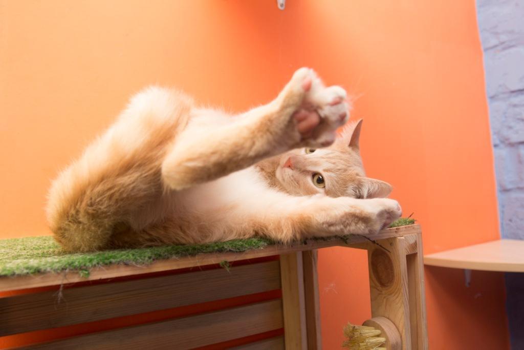 от чего стрессуют коты