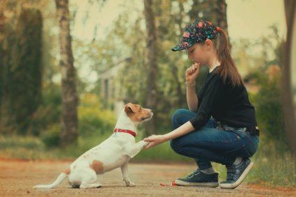 С чего начинать, если вы хотите завести собаку