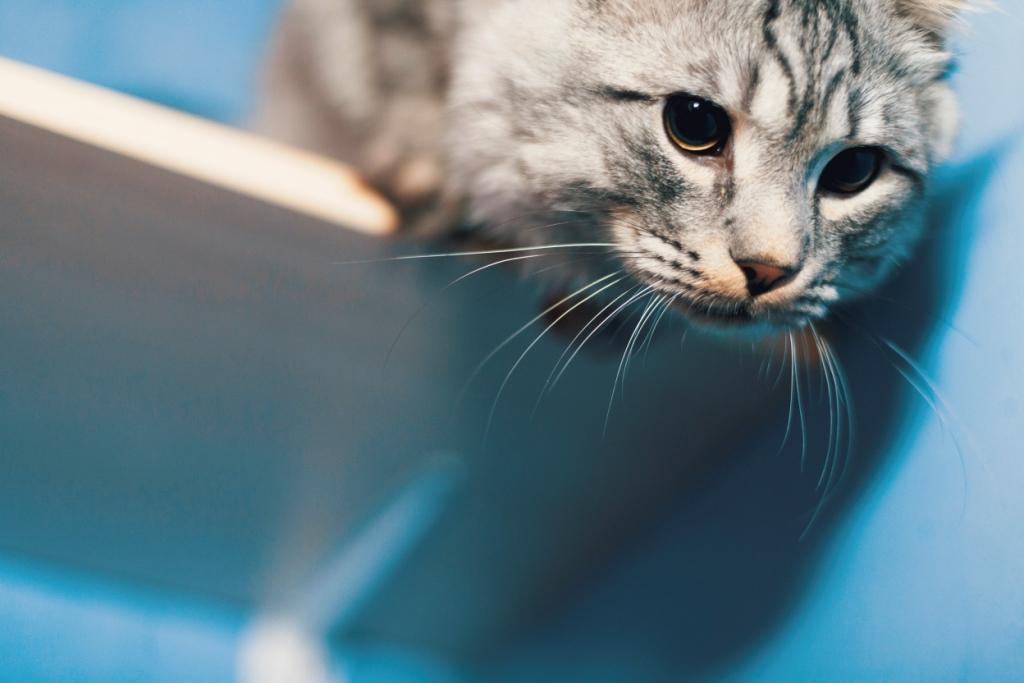 кошка лазает по мебели почему