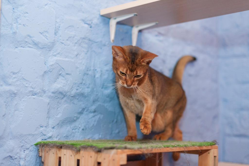 от чего кошки всегда карабкаются наверх - ответ на вопрос