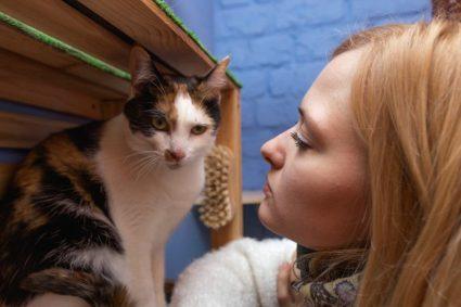 Почему ваша кошки всегда лазят по возвышенностям