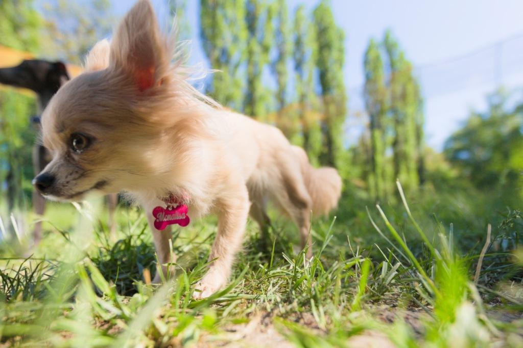 как собаки переносят шампунь для людей