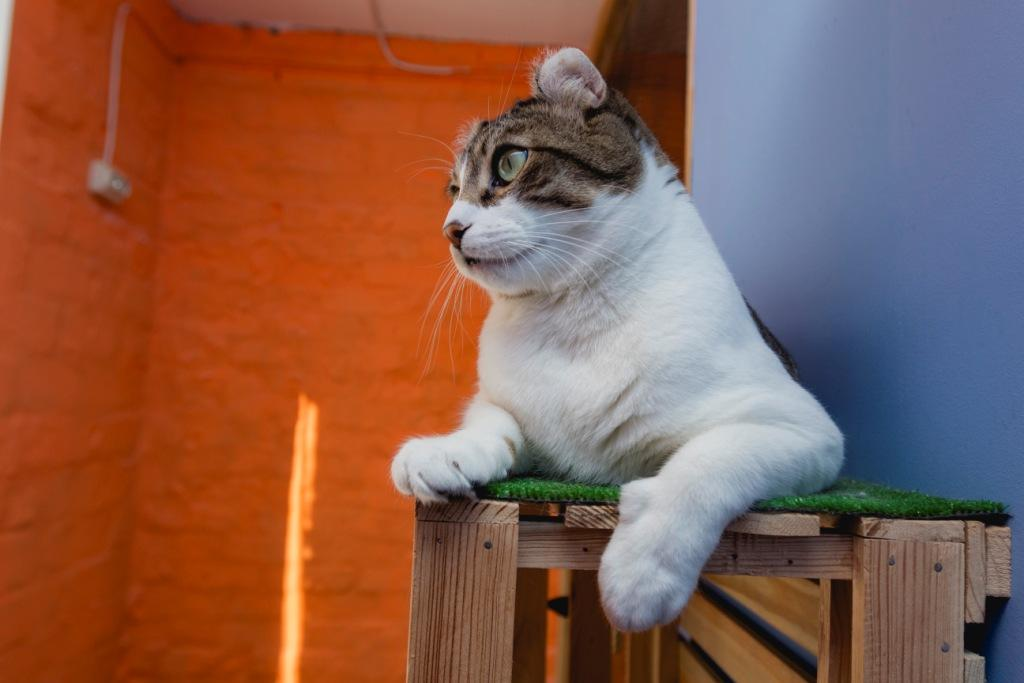 кошка прыгает на мебель что делать