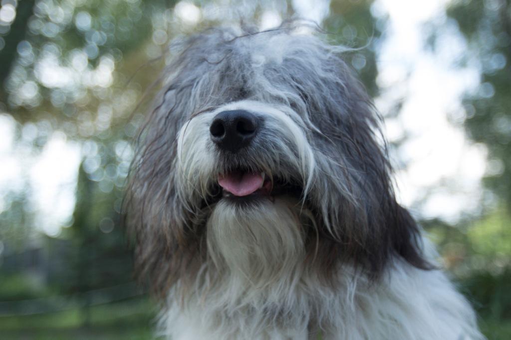 каким шампунем мыть собак правильно