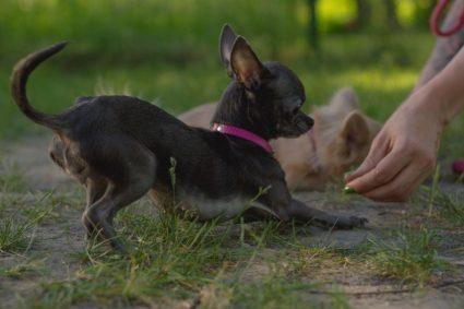 Фрукты и овощи, которые собакам можно давать