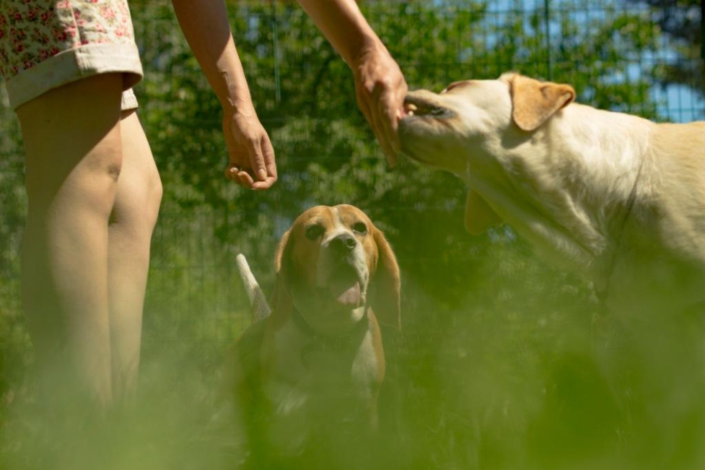 can dogs taste sweet