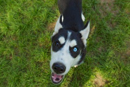 Имеют ли собаки вкусовые рецепторы?