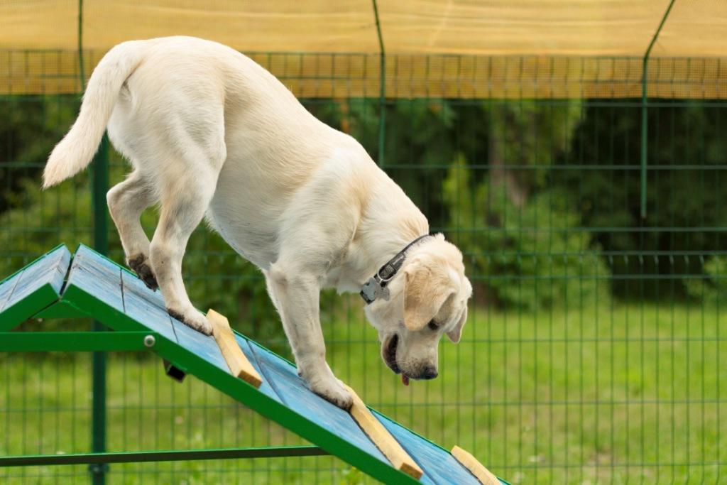 собака хромает на передние лапы причины лечение