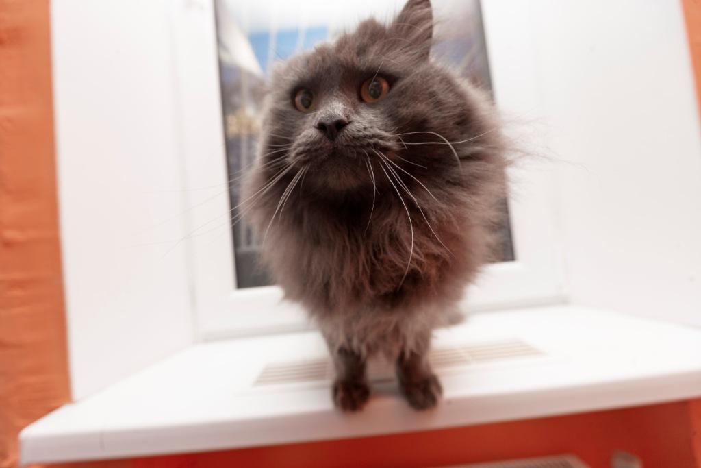 почему кошка не дает себя погладить