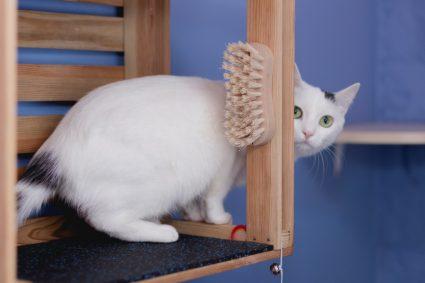 Как помыть кота и остаться живым