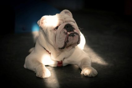 Приучаем собаку стричь когти и принимать лекарство