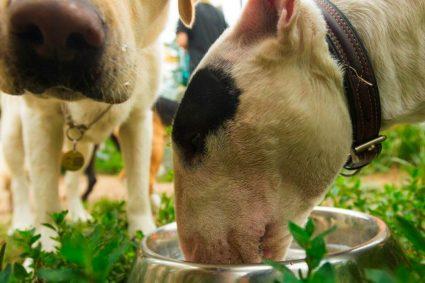 Почему собака копает в своей миске с водой?