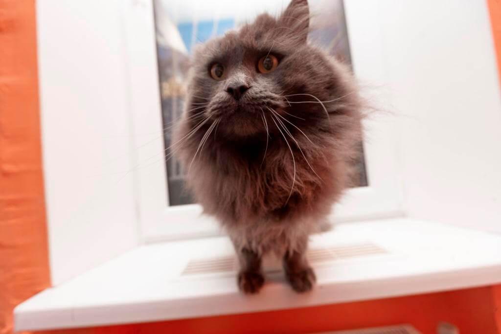 почему коты смотрят в окно