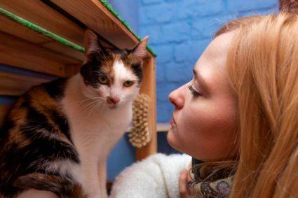 Как сходить с котом или собакой к ветеринару и не заработать нервный срыв
