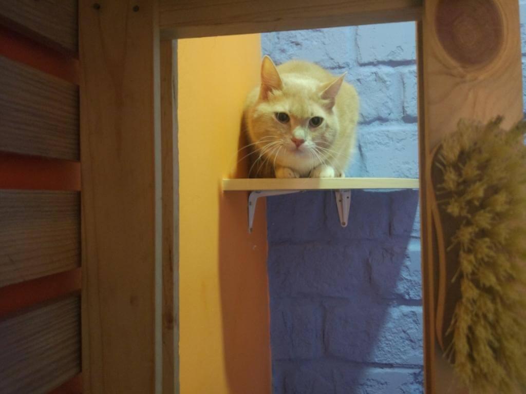 почему кошки смотрят в окно - результаты исследований