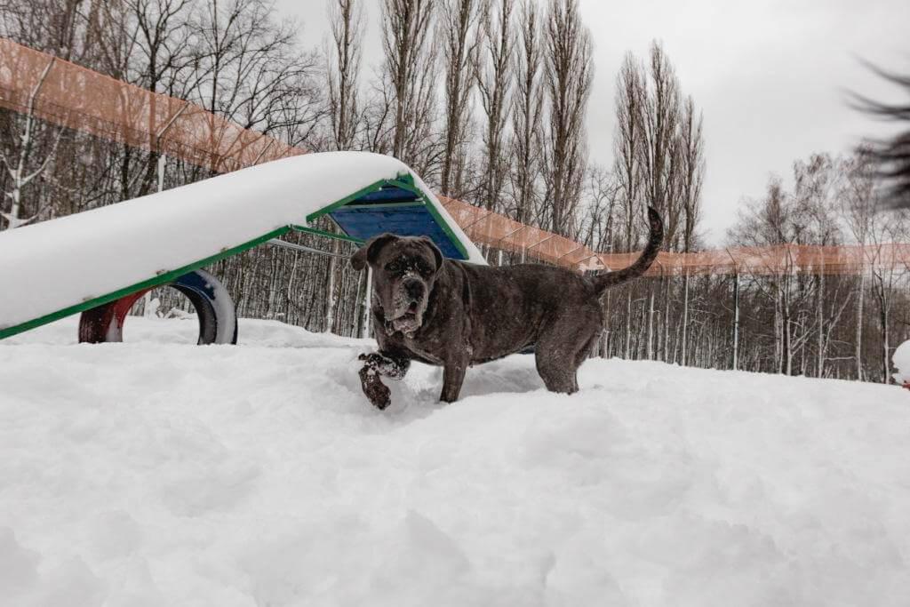 выгул собак зимой