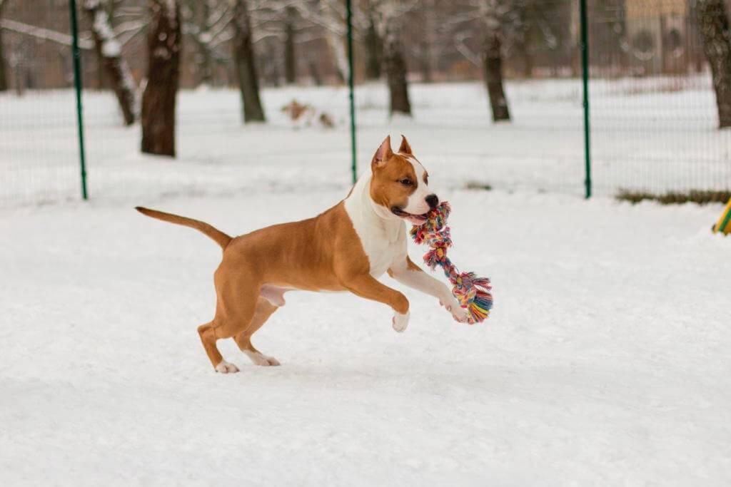 как правильно выгуливать собак в зимний период