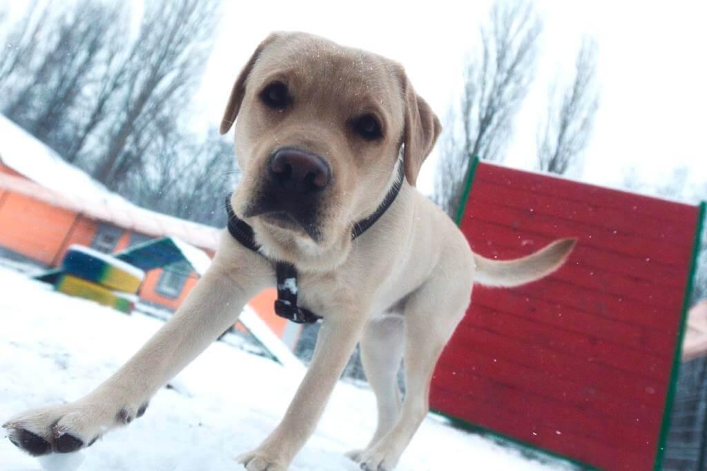 как выгуливать собаку зимой