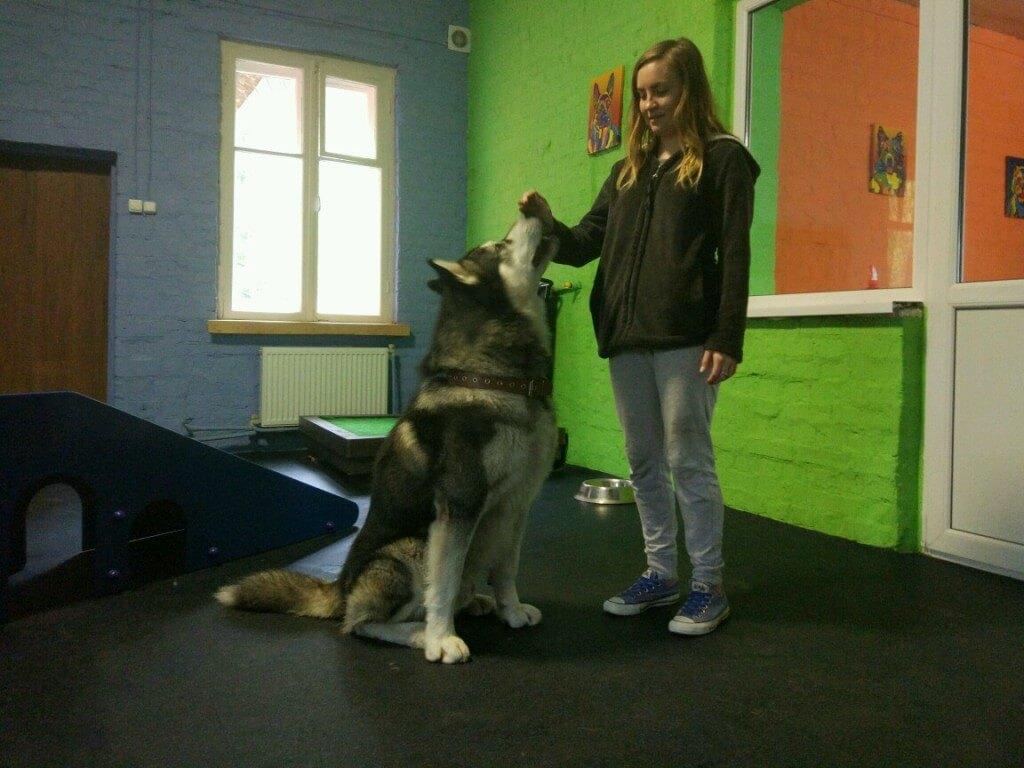 большая собака - фото
