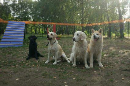 Крупных собак любят больше