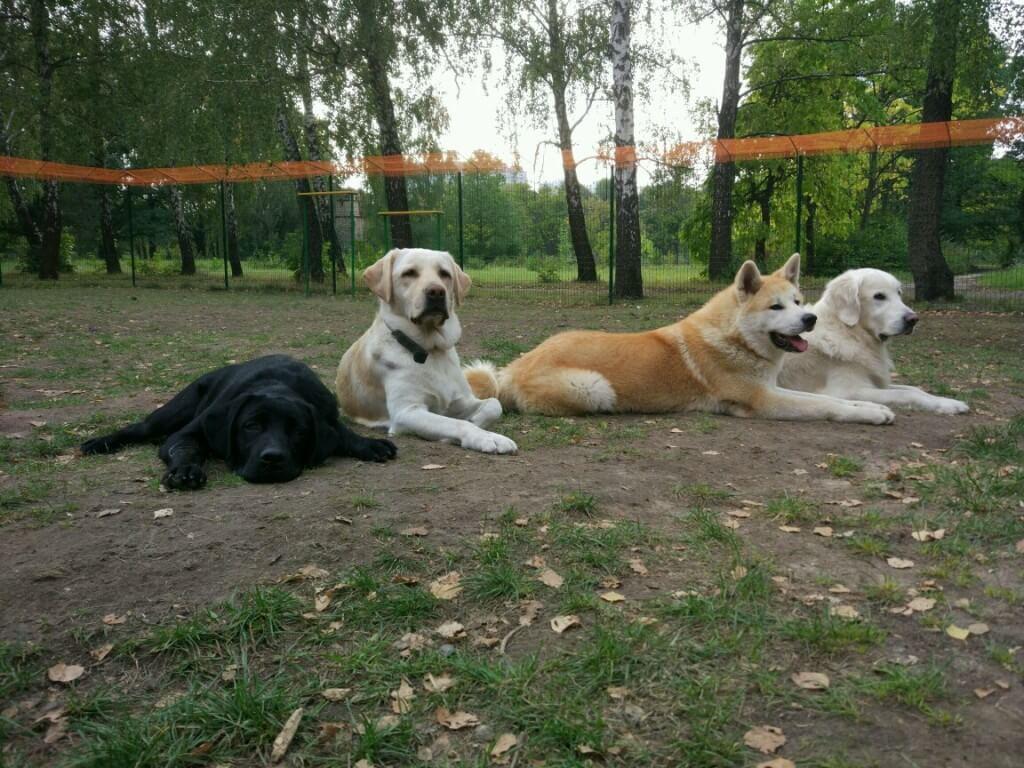 большие собаки - фото