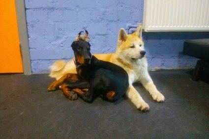 Как приучить собаку к своему месту?