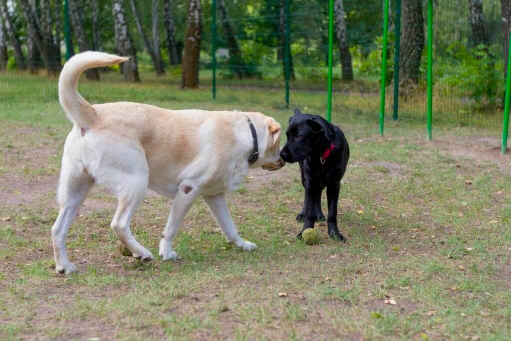 обоняние собак