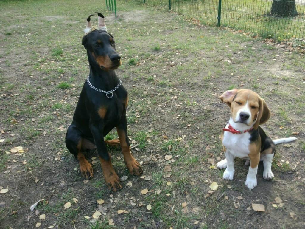 внимание собаки - как привлечь