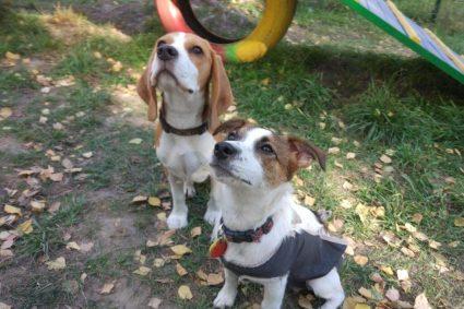Как привлечь внимание собаки: 3 простых и веселых упражнения