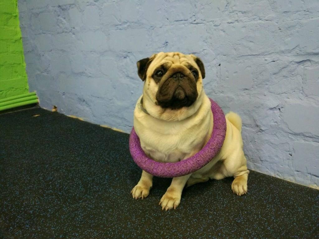 невнимательная собака - как заполучить внимание питомца