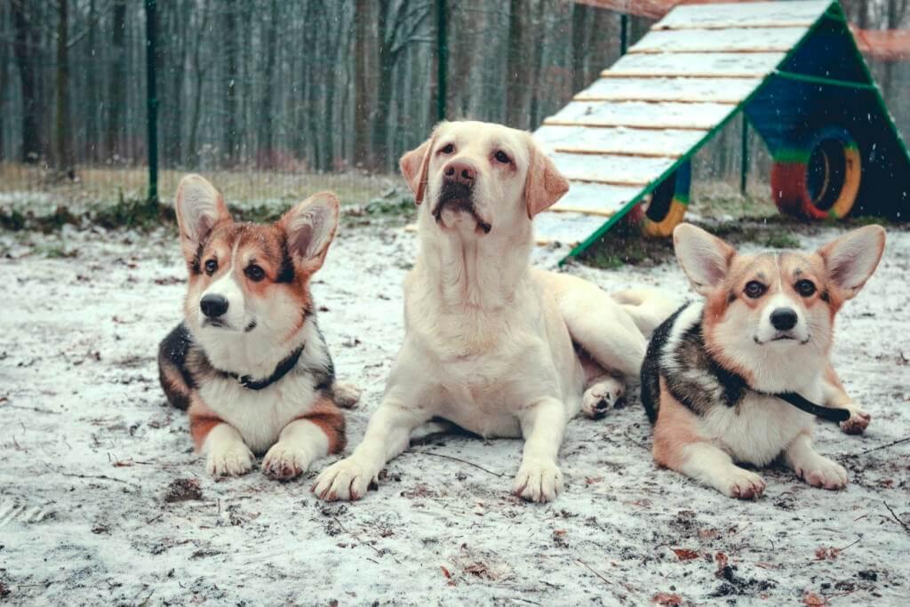 собака с рассеянным вниманием - как привлечь