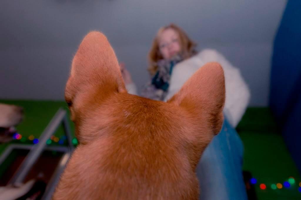 любовь между людьми и собаками