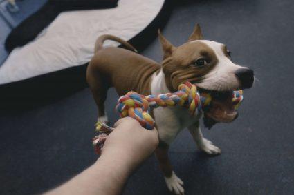 Почему некоторые собаки более агрессивны?