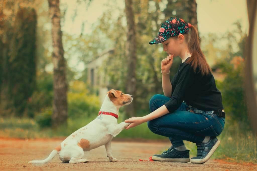 почему собаки любят людей