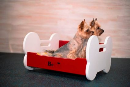 Выбор правильной кровати для вашей собаки