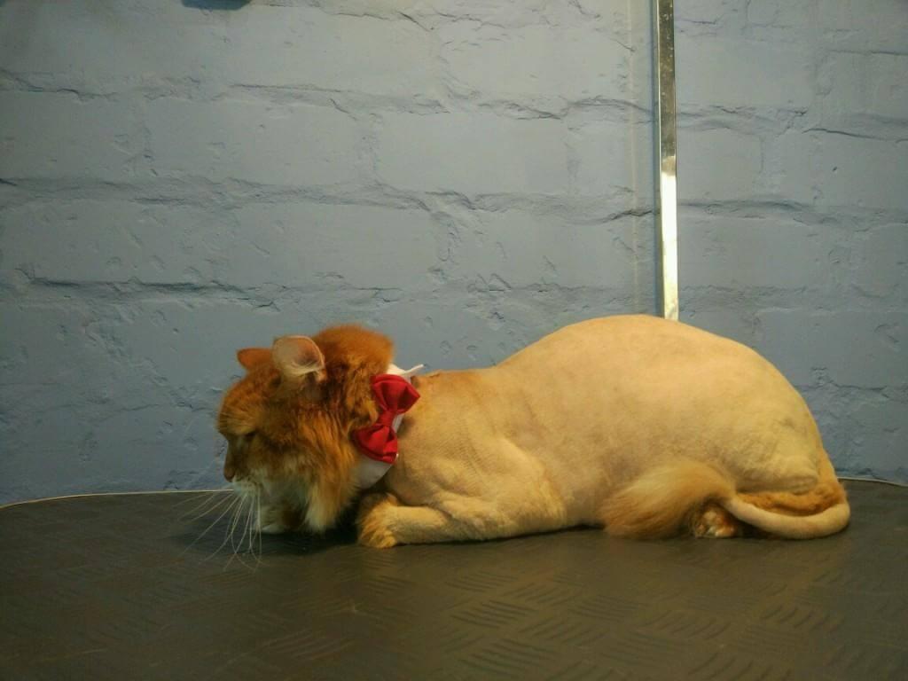 что делать если кот очень сильно линяет