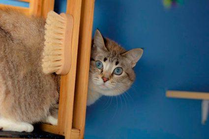 Что делать если кот или кошка сильно линяет