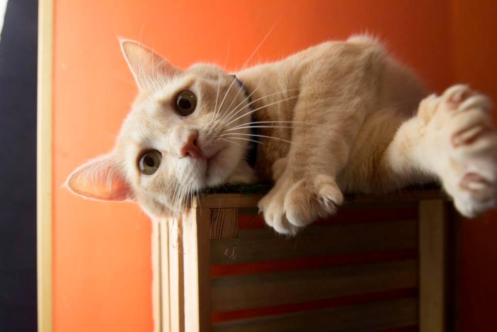 линька у котов
