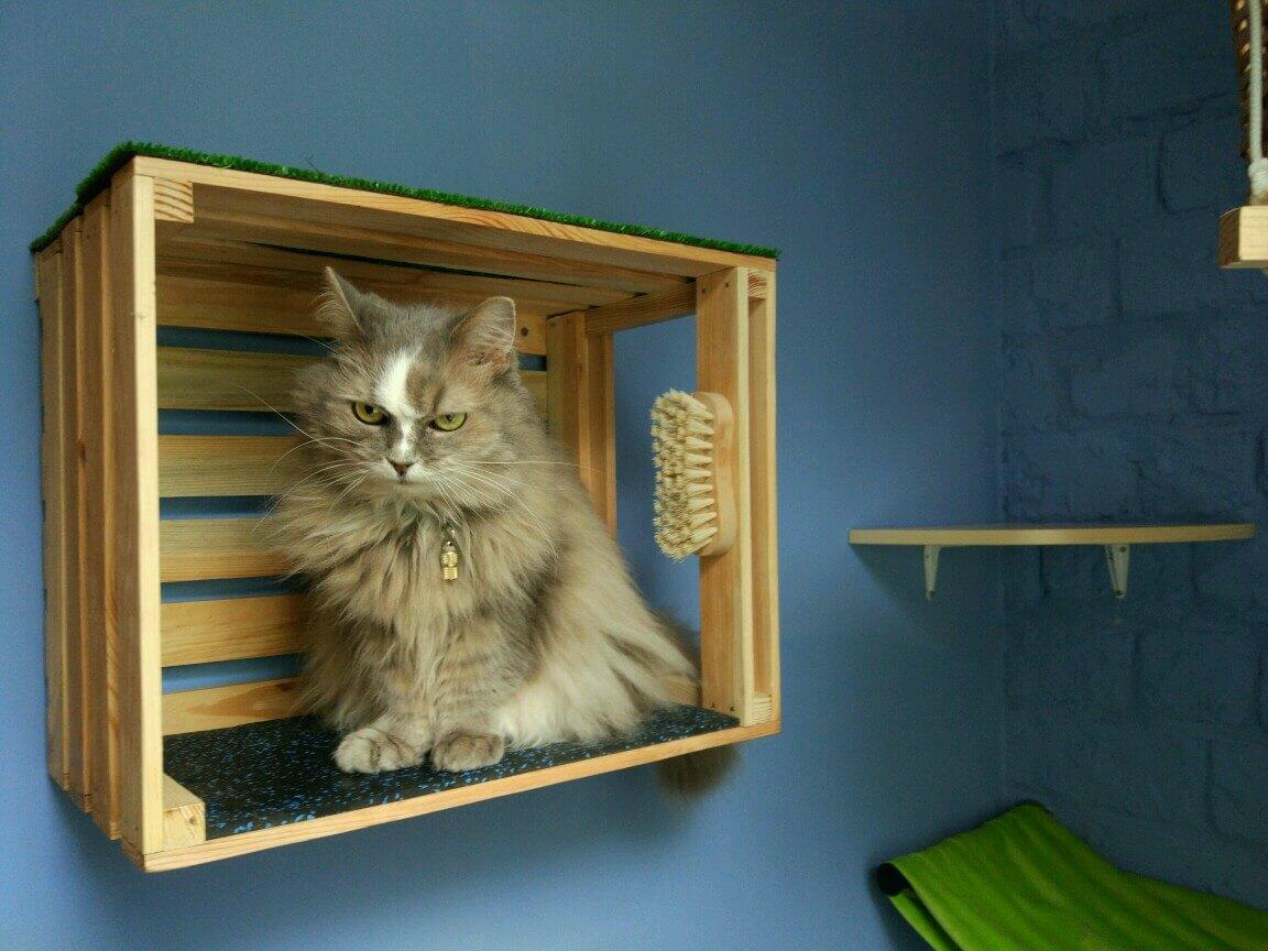 что делать чтобы кошка меньше линяла