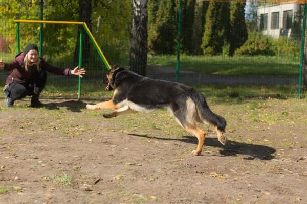 Games to help make your dog more confident