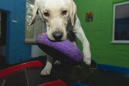 Игры которые помогут сделать собаку более уверенной в себе