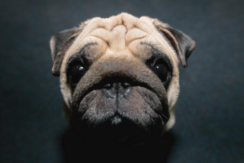 у собаки стресс - причина -стресс владельца