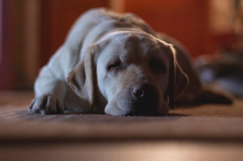 собака перенимает стресс хозяина