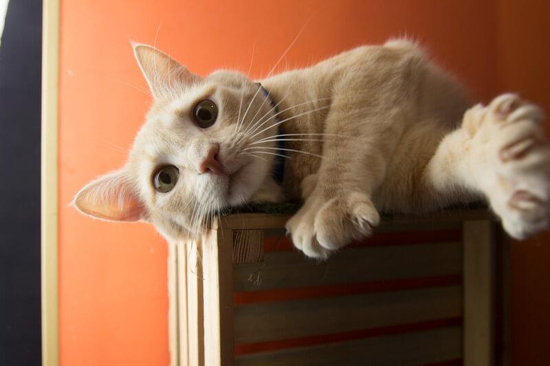 кот или кошка кусаются причины