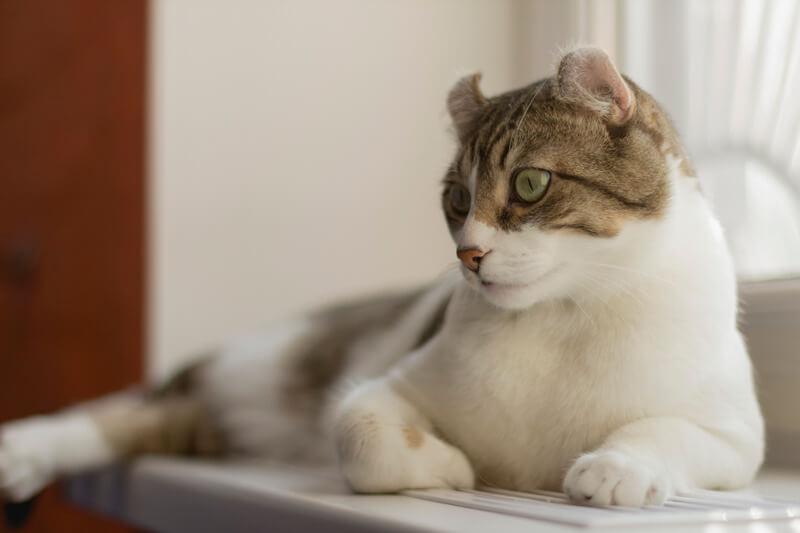 почему кот кусает руки