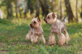 10 самых популярных пород собак