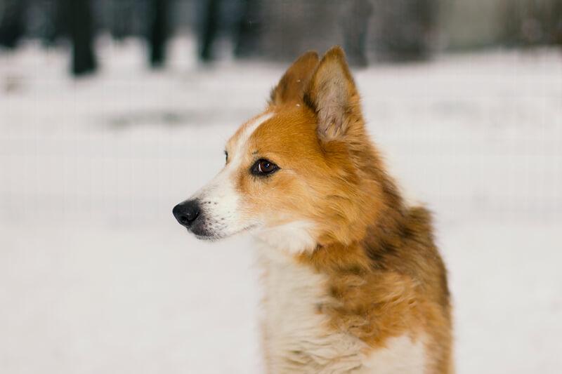 почему собака отводит взгляд