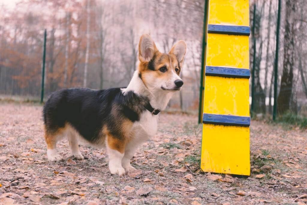 собака осень - фото